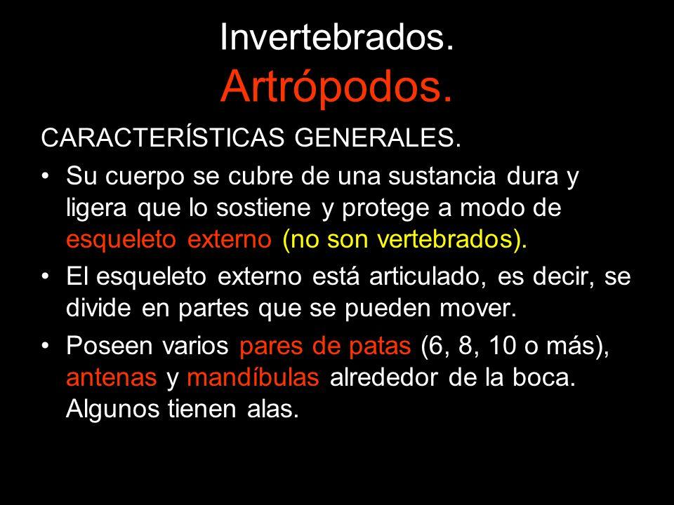 Invertebrados.Artrópodos.