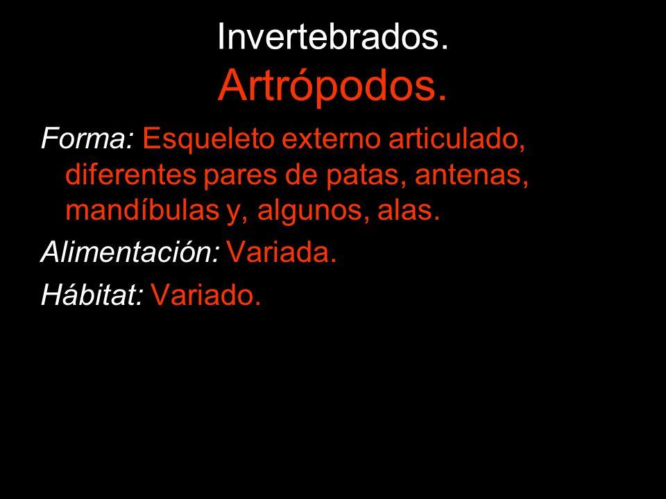 Invertebrados.Artrópodos. Son el grupo más numeroso de animales que existe (80%).