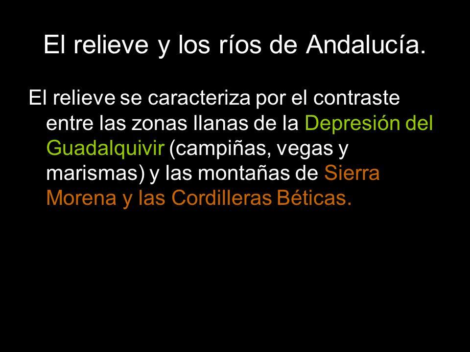 El relieve se caracteriza por el contraste entre las zonas llanas de la Depresión del Guadalquivir (campiñas, vegas y marismas) y las montañas de Sierra Morena y las Cordilleras Béticas.