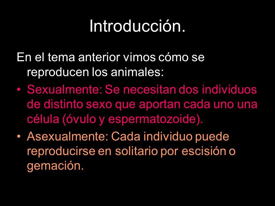 Introducción. En el tema anterior vimos cómo se reproducen los animales: Sexualmente: Se necesitan dos individuos de distinto sexo que aportan cada un