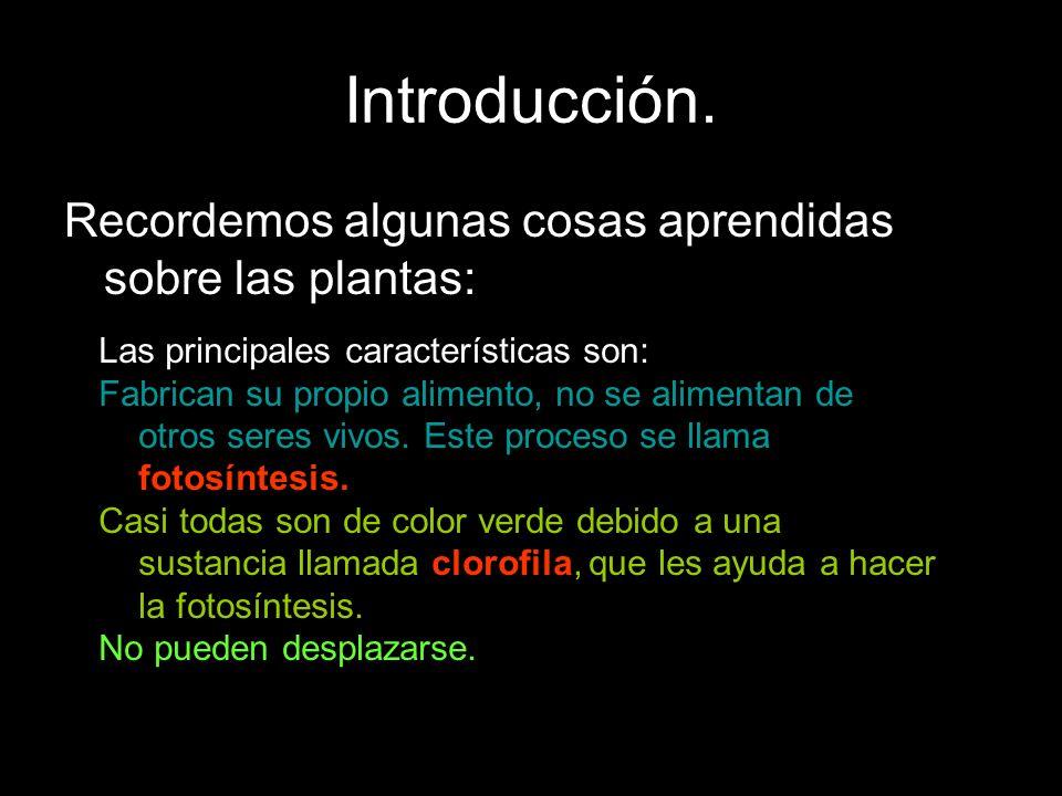 Introducción. Recordemos algunas cosas aprendidas sobre las plantas: Las principales características son: Fabrican su propio alimento, no se alimentan