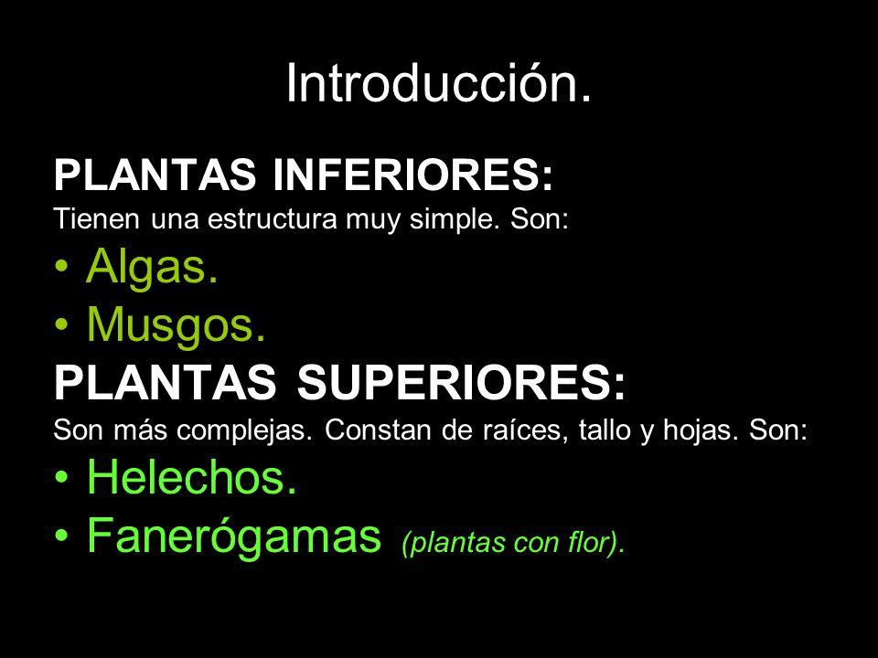 Introducción. PLANTAS INFERIORES: Tienen una estructura muy simple. Son: Algas. Musgos. PLANTAS SUPERIORES: Son más complejas. Constan de raíces, tall