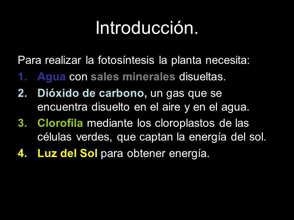 Introducción. Para realizar la fotosíntesis la planta necesita: 1.Agua con sales minerales disueltas. 2.Dióxido de carbono, un gas que se encuentra di