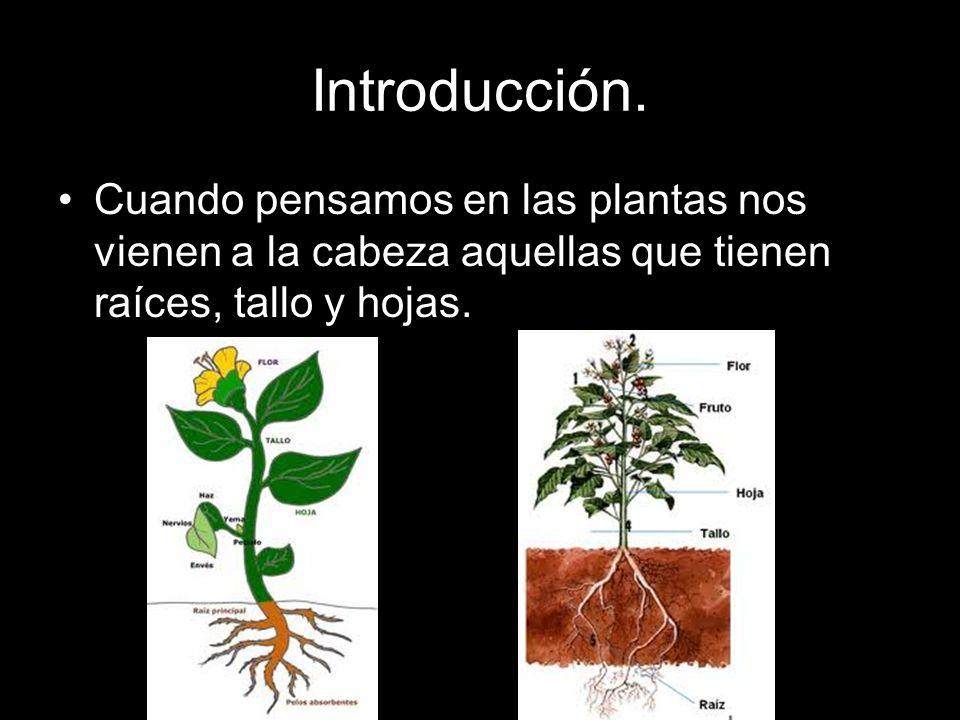 Introducción. Cuando pensamos en las plantas nos vienen a la cabeza aquellas que tienen raíces, tallo y hojas.