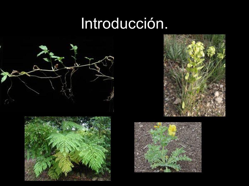 Las plantas se pueden denominar también vegetales y las hay de muchos tipos, desde los árboles hasta las algas.