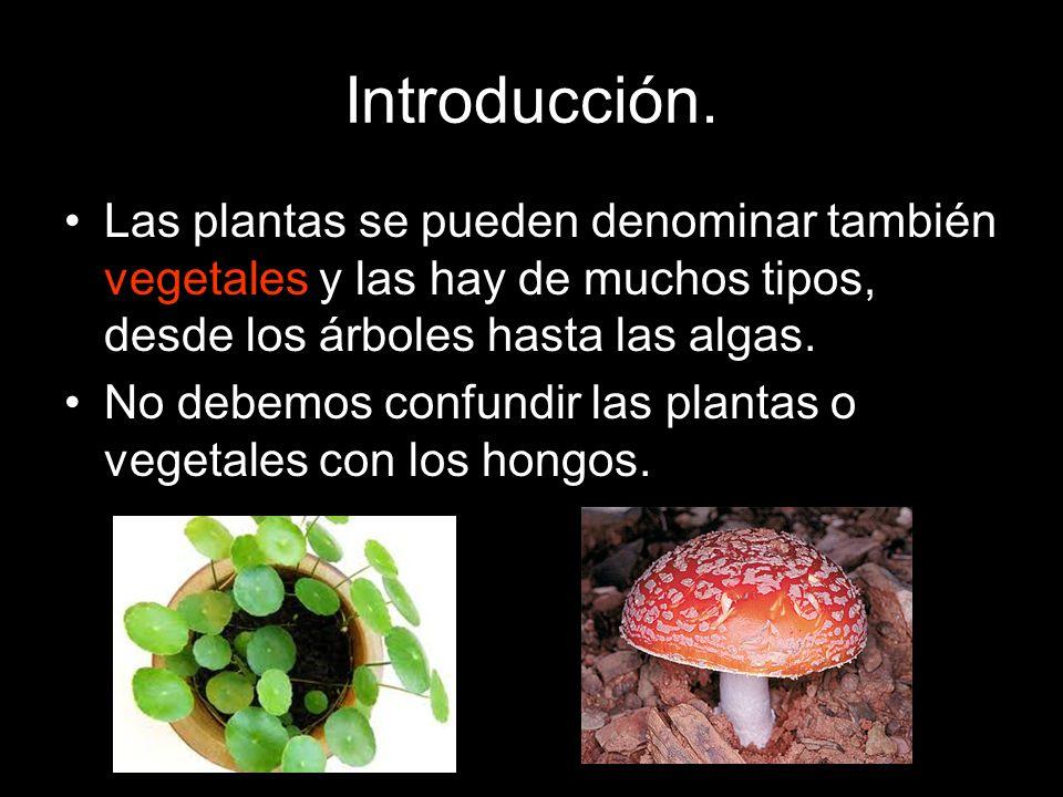 Las plantas se pueden denominar también vegetales y las hay de muchos tipos, desde los árboles hasta las algas. No debemos confundir las plantas o veg