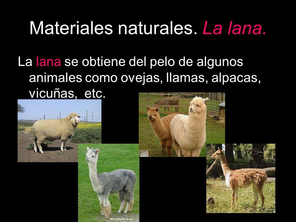 Materiales naturales. La lana. La lana se obtiene del pelo de algunos animales como ovejas, llamas, alpacas, vicuñas, etc.