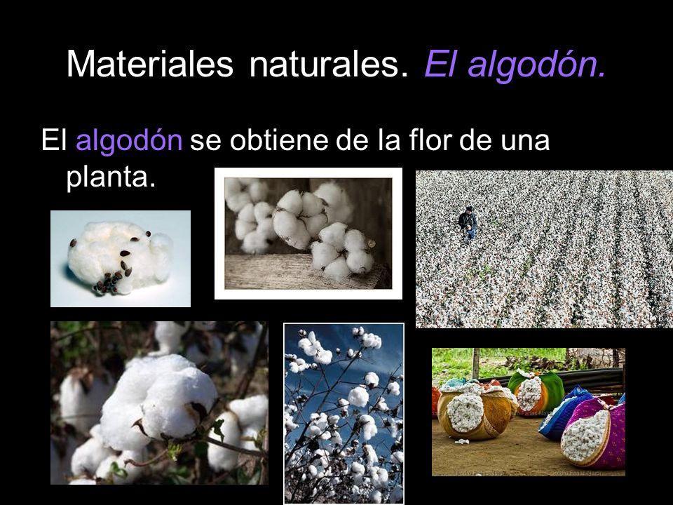 Materiales naturales. El algodón. El algodón se obtiene de la flor de una planta.