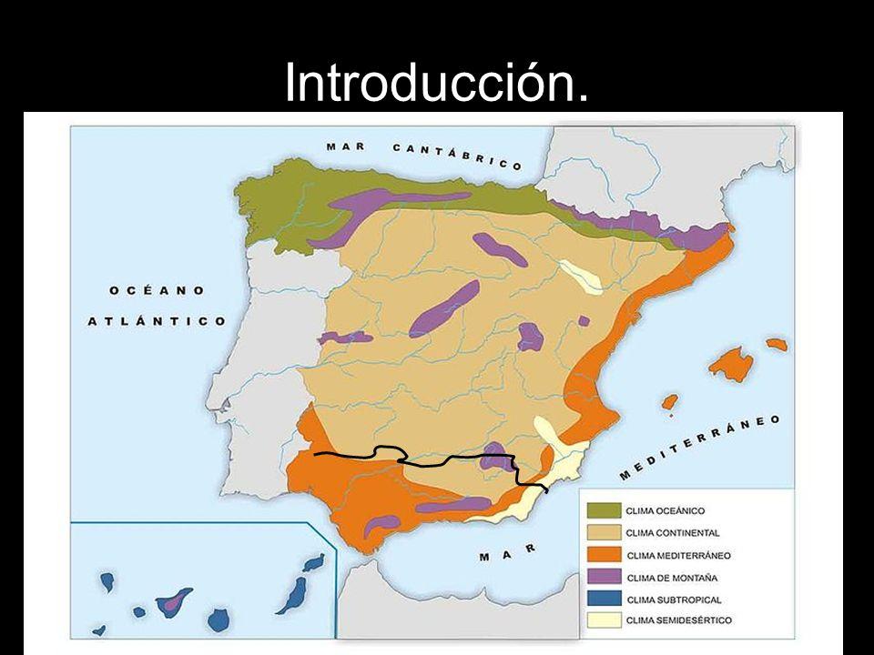 VEGETACIÓN: En Andalucía predomina el bosque mediterráneo: Encina.