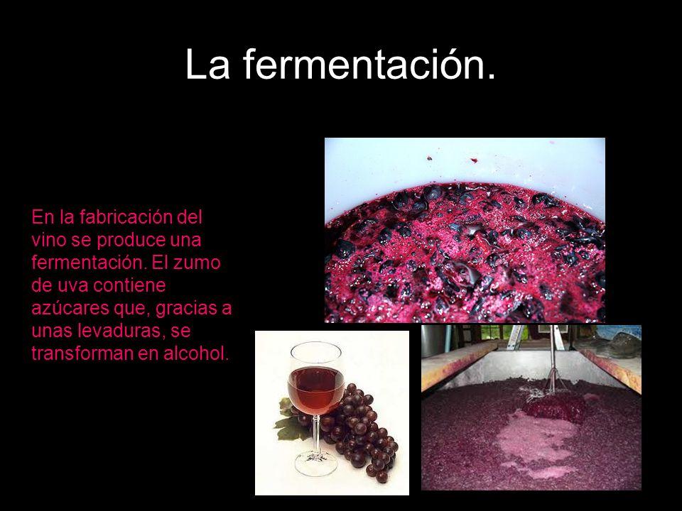 La fermentación. En la fabricación del vino se produce una fermentación. El zumo de uva contiene azúcares que, gracias a unas levaduras, se transforma