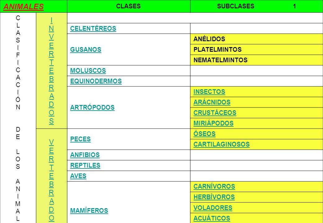 1 ANIMALES CLASESSUBCLASES 1 CLASIFICACIÓN DELOSANIMALESCLASIFICACIÓN DELOSANIMALES INVERTEBRADOSINVERTEBRADOS CELENTÉREOS GUSANOS ANÉLIDOS PLATELMINT