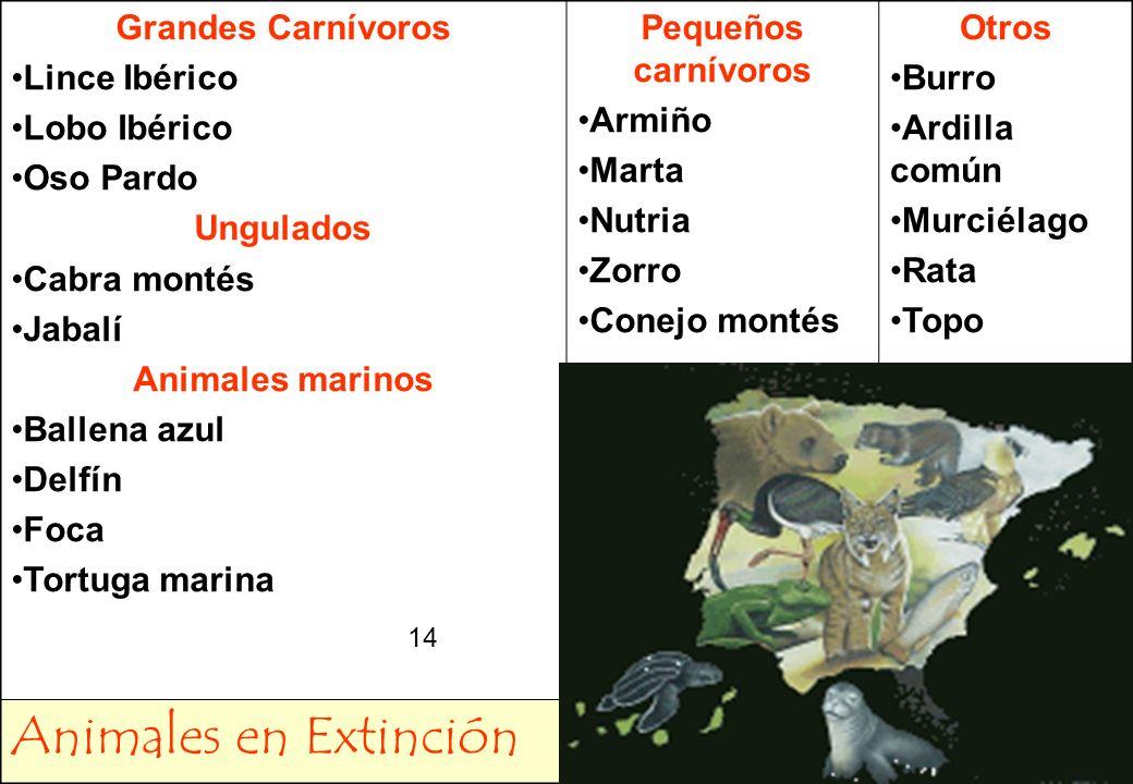 14 Grandes Carnívoros Lince Ibérico Lobo Ibérico Oso Pardo Ungulados Cabra montés Jabalí Animales marinos Ballena azul Delfín Foca Tortuga marina Pequ