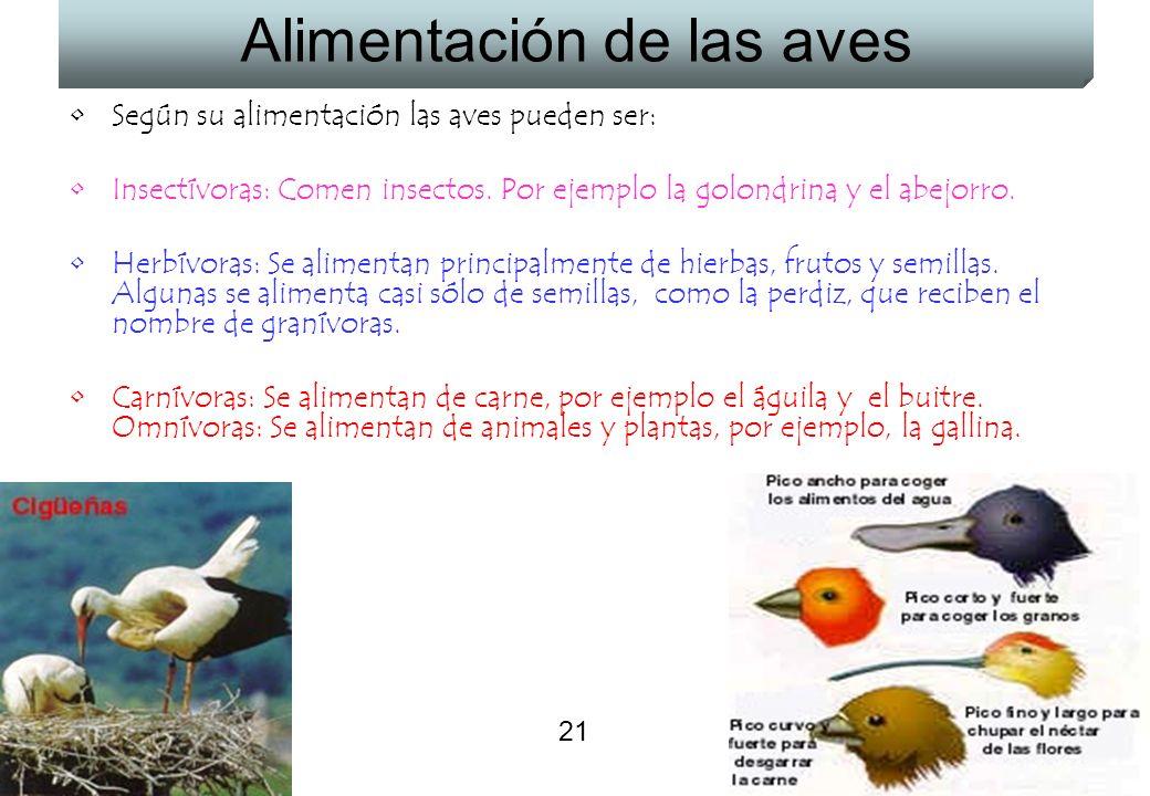21 Alimentación de las aves Según su alimentación las aves pueden ser: Insectívoras: Comen insectos. Por ejemplo la golondrina y el abejorro. Herbívor