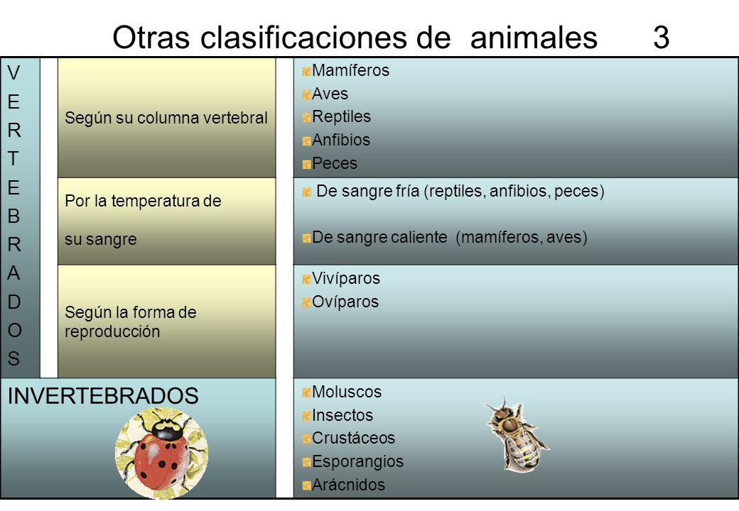 3 Otras clasificaciones de animales 3 VERTEBRADOSVERTEBRADOS Según su columna vertebral Mamíferos Aves Reptiles Anfibios Peces Por la temperatura de s