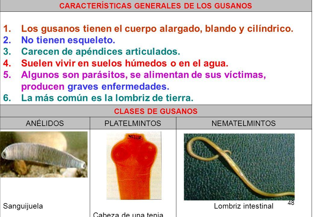 48 CARACTERÍSTICAS GENERALES DE LOS GUSANOS 1.Los gusanos tienen el cuerpo alargado, blando y cilíndrico. 2.No tienen esqueleto. 3.Carecen de apéndice