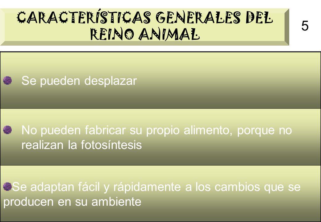 5 CARACTERÍSTICAS GENERALES DEL REINO ANIMAL Se pueden desplazar No pueden fabricar su propio alimento, porque no realizan la fotosíntesis Se adaptan