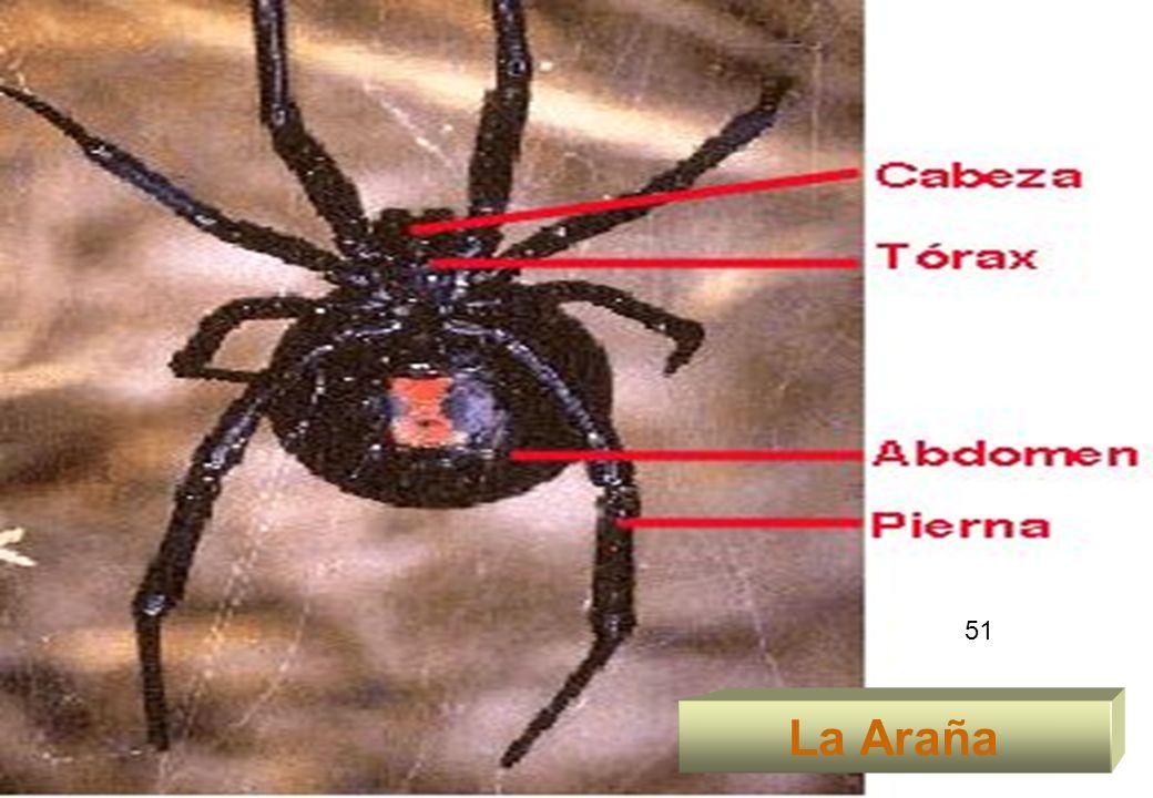 51 La Araña 51
