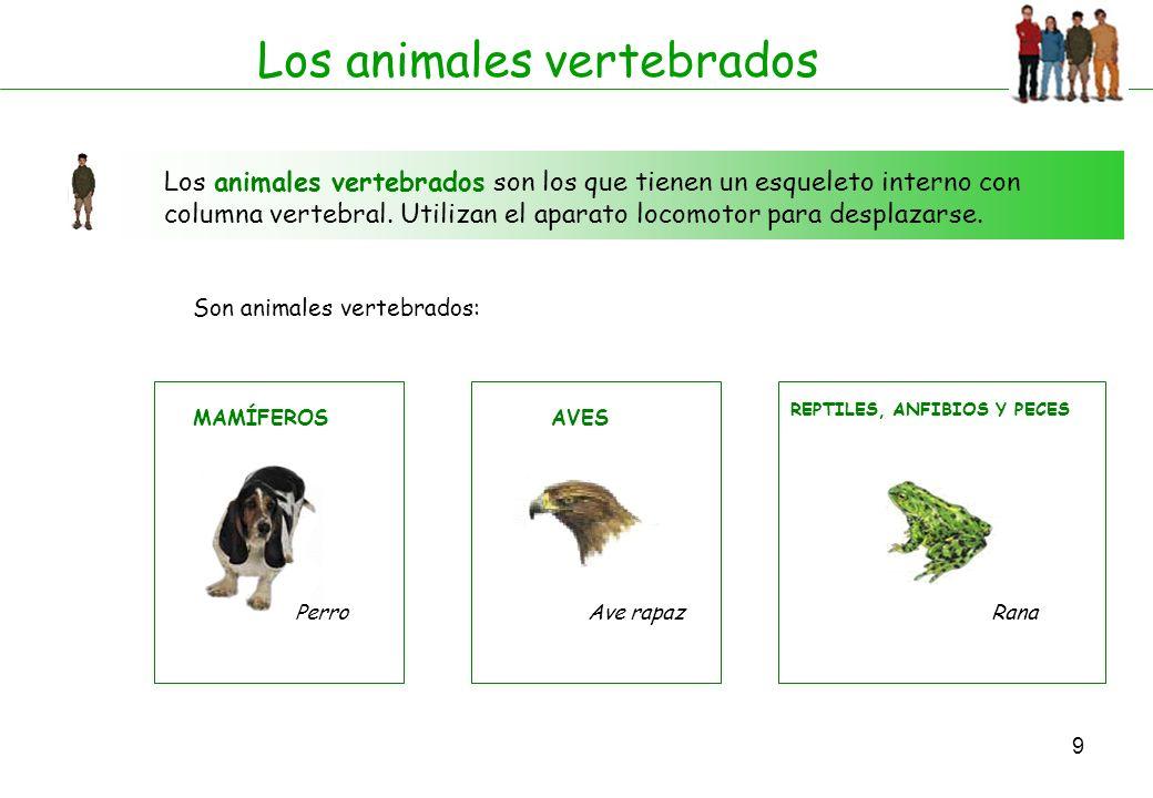 9 Los animales vertebrados Los animales vertebrados son los que tienen un esqueleto interno con columna vertebral. Utilizan el aparato locomotor para