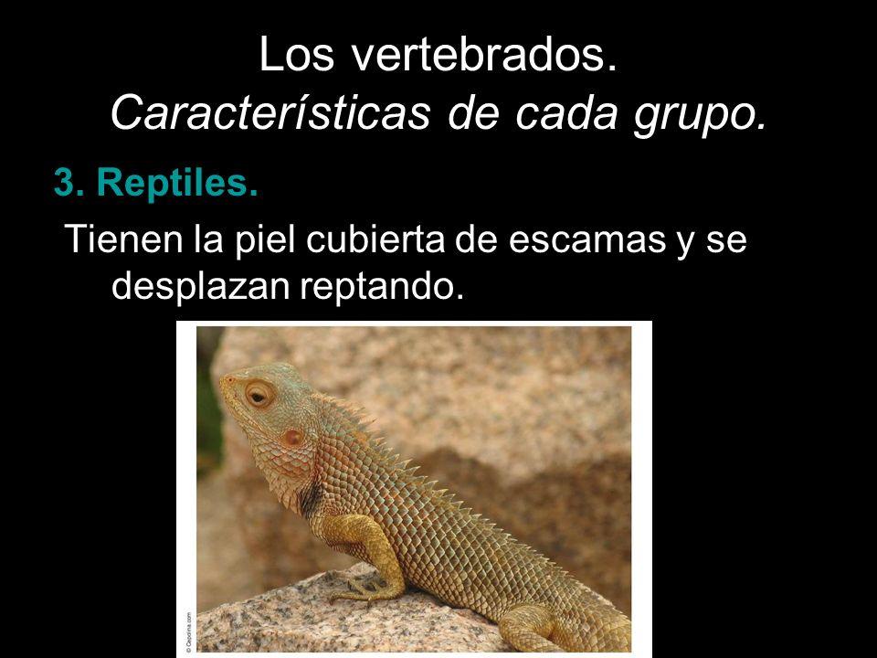 Los vertebrados. Características de cada grupo. 3. Reptiles. Tienen la piel cubierta de escamas y se desplazan reptando.