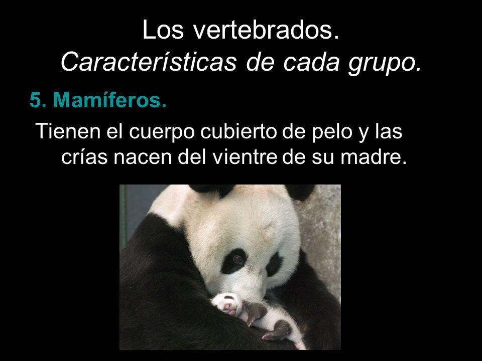Los vertebrados. Características de cada grupo. 5. Mamíferos. Tienen el cuerpo cubierto de pelo y las crías nacen del vientre de su madre.
