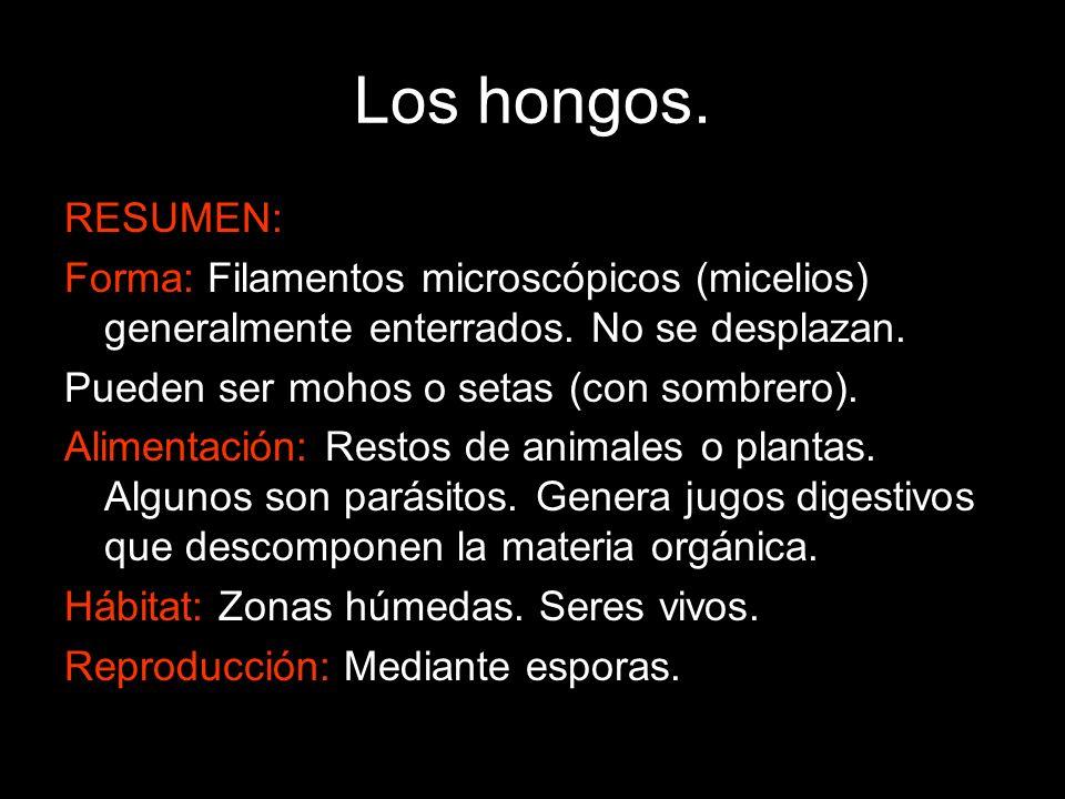 Los hongos. RESUMEN: Forma: Filamentos microscópicos (micelios) generalmente enterrados. No se desplazan. Pueden ser mohos o setas (con sombrero). Ali