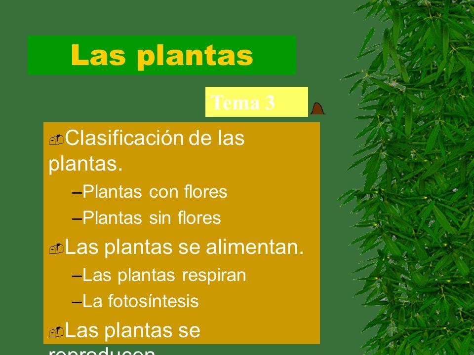 Las plantas Tema 3 Clasificación de las plantas. –Plantas con flores –Plantas sin flores Las plantas se alimentan. –Las plantas respiran –La fotosínte