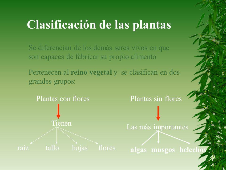 Clasificación de las plantas Se diferencian de los demás seres vivos en que son capaces de fabricar su propio alimento Pertenecen al reino vegetal y s