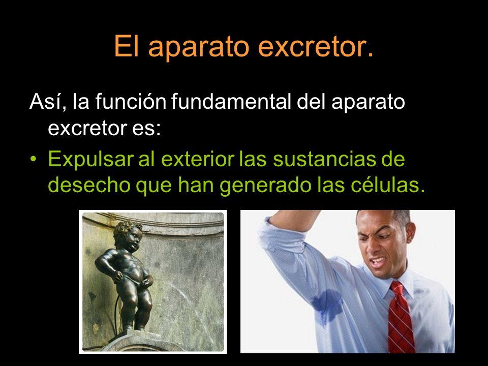 El aparato excretor. Así, la función fundamental del aparato excretor es: Expulsar al exterior las sustancias de desecho que han generado las células.