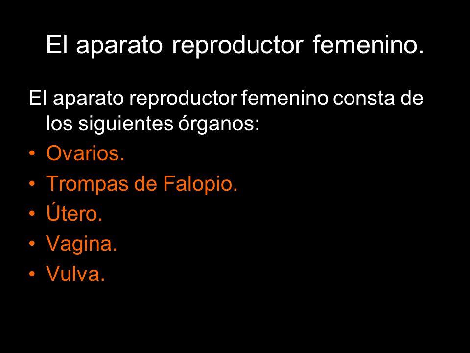 El aparato reproductor femenino. El aparato reproductor femenino consta de los siguientes órganos: Ovarios. Trompas de Falopio. Útero. Vagina. Vulva.