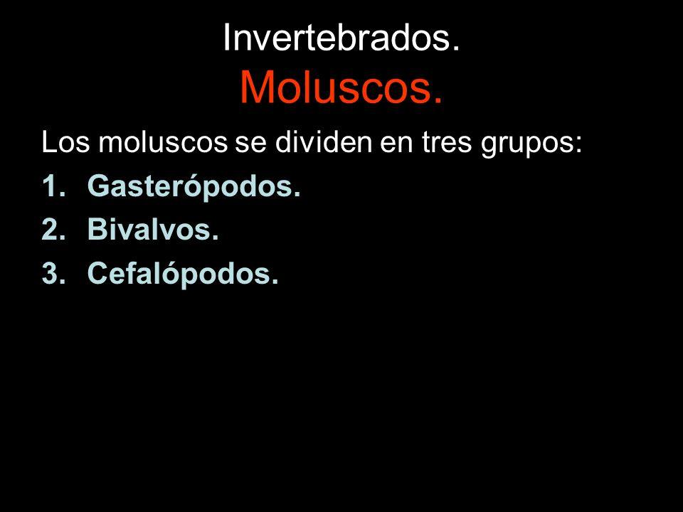 Invertebrados. Moluscos. Los moluscos se dividen en tres grupos: 1.Gasterópodos. 2.Bivalvos. 3.Cefalópodos.