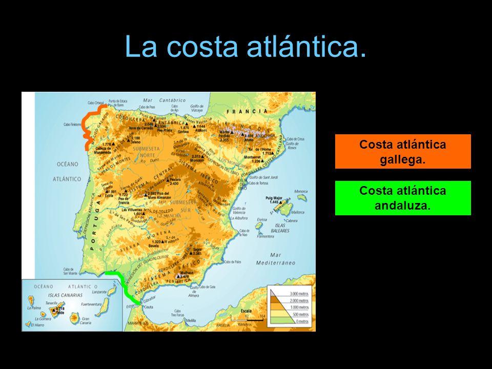 La costa atlántica. Podemos distinguir : Costa atlántica gallega. Costa atlántica andaluza.