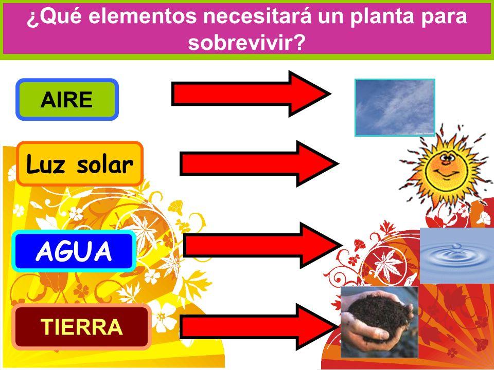 ¿Qué elementos necesitará un planta para sobrevivir? AGUA Luz solar AIRE TIERRA