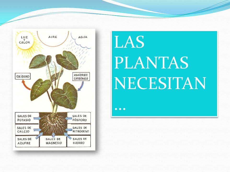 LAS PLANTAS NECESITAN …