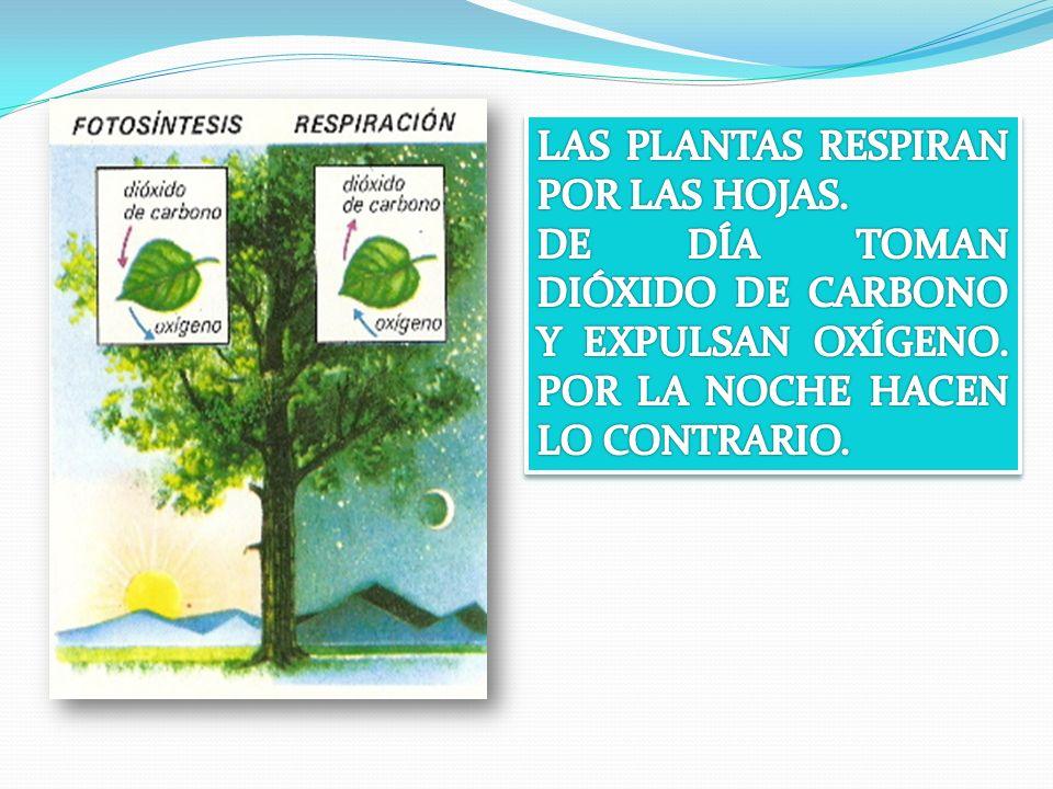 LA REPRODUCCIÓN SEXUAL DE LAS FANERÓGAMAS 3 FORMACIÓN DE LA SEMILLA Y EL FRUTO 5.- La dispersión de las semillas.