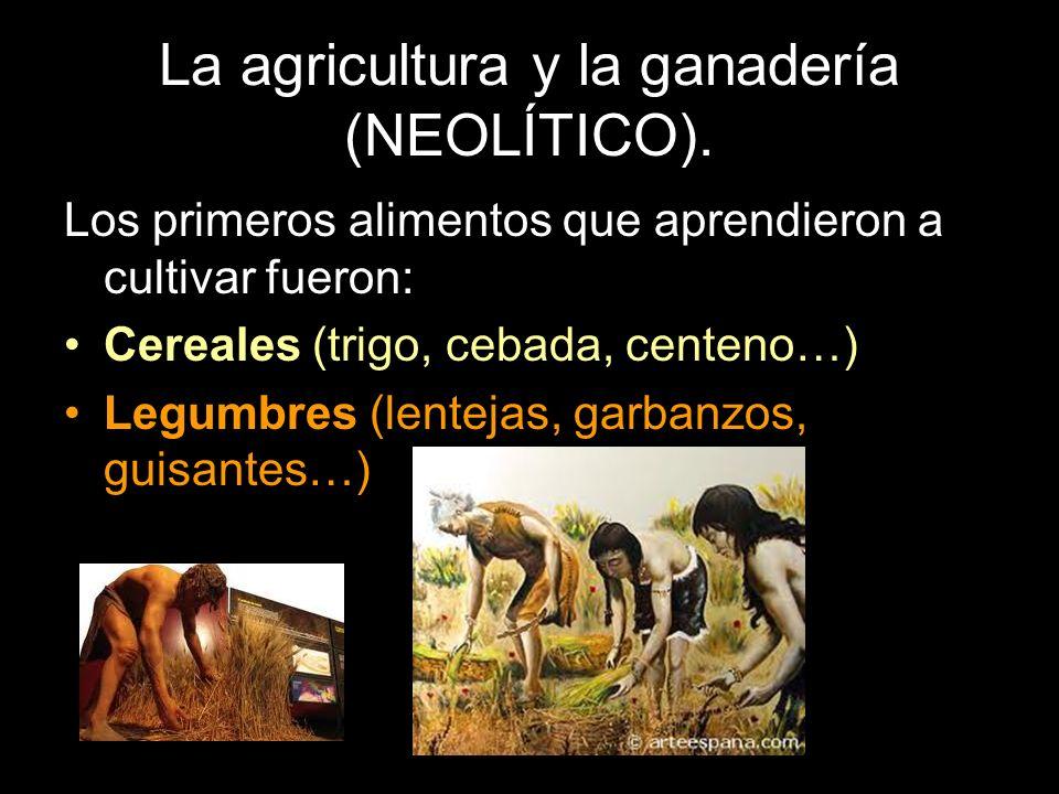 La agricultura y la ganadería (NEOLÍTICO). Los primeros alimentos que aprendieron a cultivar fueron: Cereales (trigo, cebada, centeno…) Legumbres (len