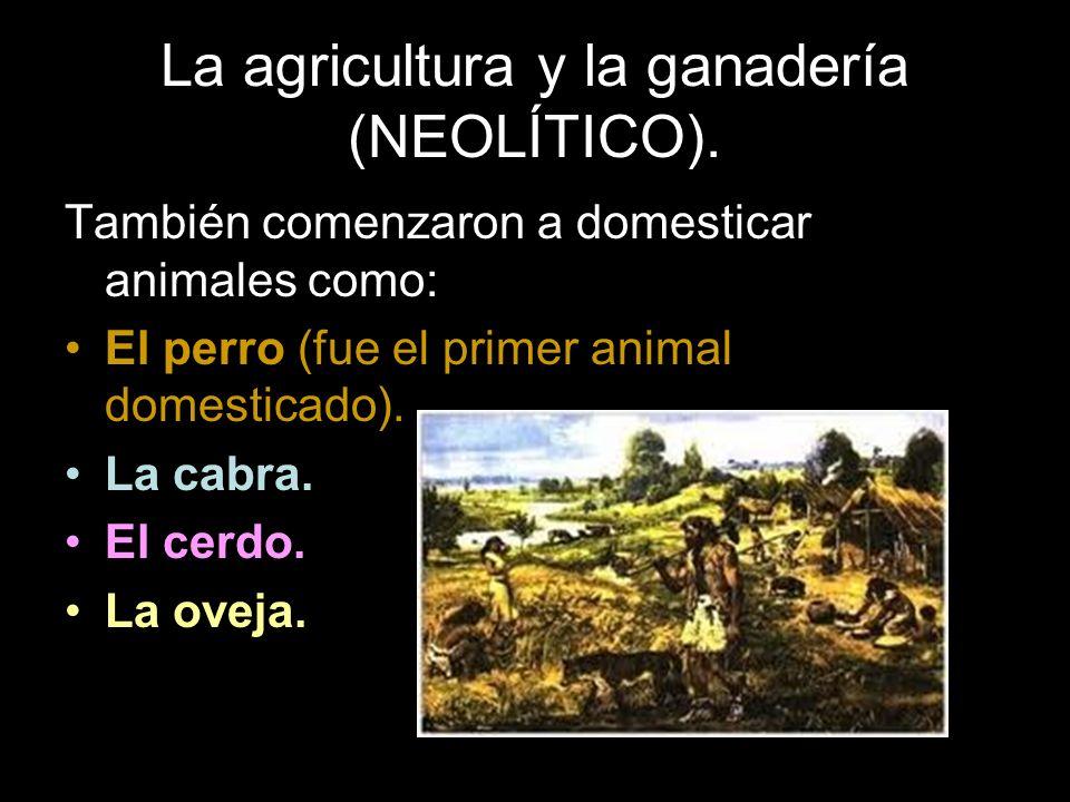 También comenzaron a domesticar animales como: El perro (fue el primer animal domesticado). La cabra. El cerdo. La oveja.