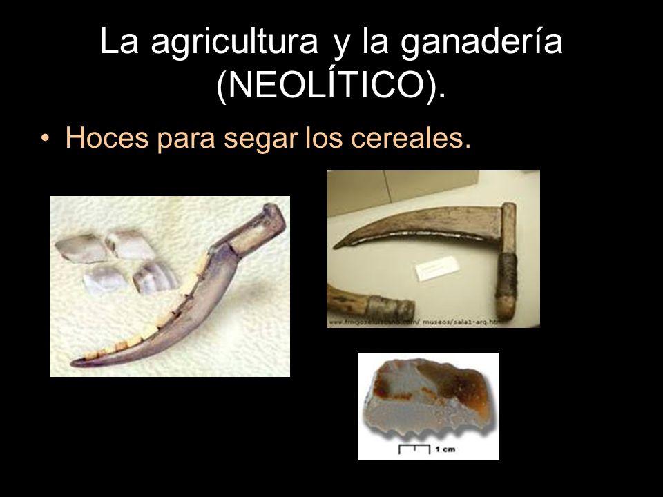 La agricultura y la ganadería (NEOLÍTICO). Hoces para segar los cereales.