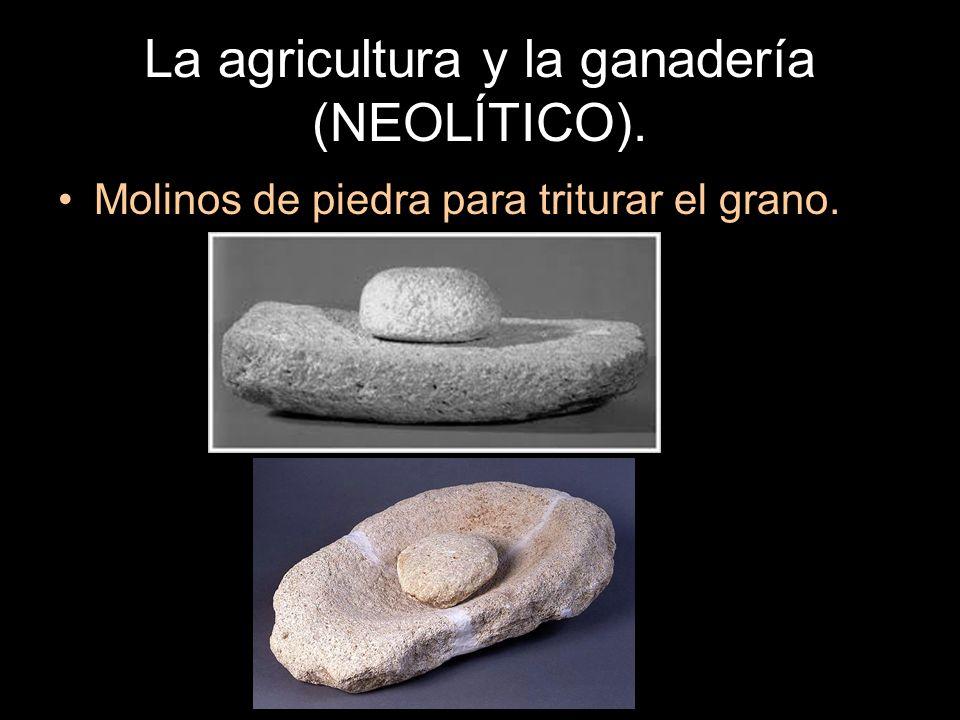 La agricultura y la ganadería (NEOLÍTICO). Molinos de piedra para triturar el grano.