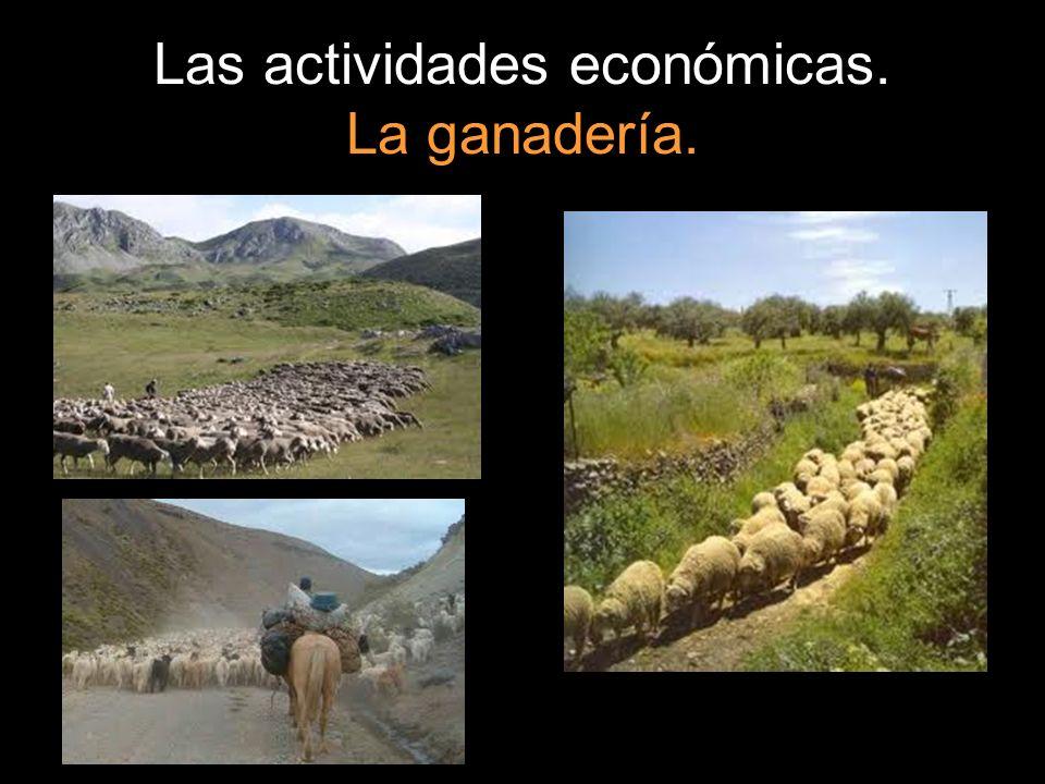 Las actividades económicas. La ganadería.