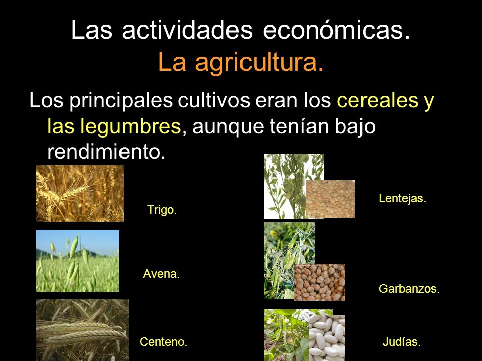 Las actividades económicas. La agricultura. Los principales cultivos eran los cereales y las legumbres, aunque tenían bajo rendimiento. Trigo. Avena.