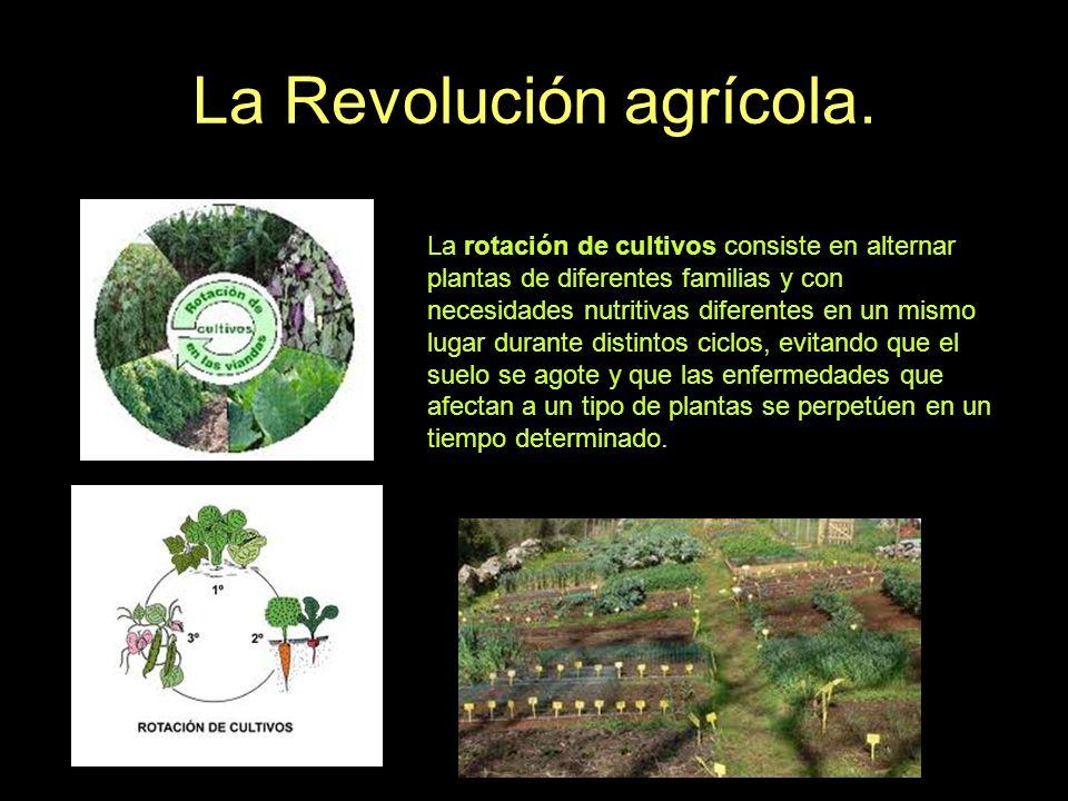 La Revolución agrícola. La rotación de cultivos consiste en alternar plantas de diferentes familias y con necesidades nutritivas diferentes en un mism