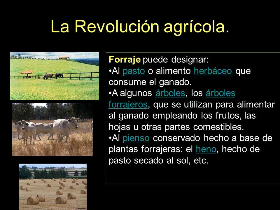 La Revolución agrícola. Forraje puede designar: Al pasto o alimento herbáceo que consume el ganado.pastoherbáceo A algunos árboles, los árboles forraj