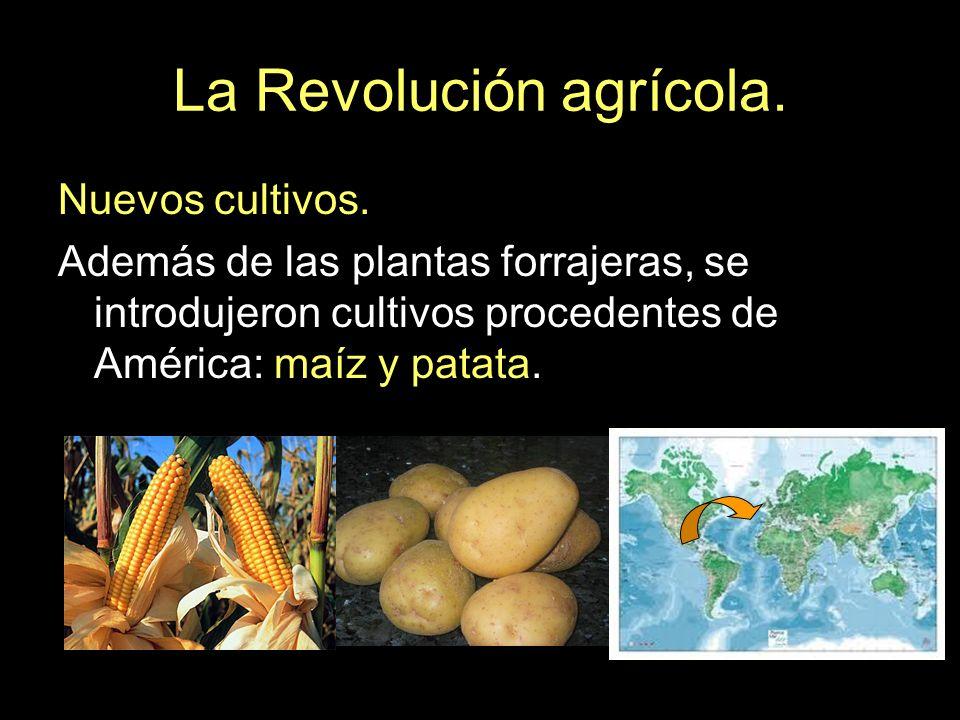 La Revolución agrícola. Nuevos cultivos. Además de las plantas forrajeras, se introdujeron cultivos procedentes de América: maíz y patata.