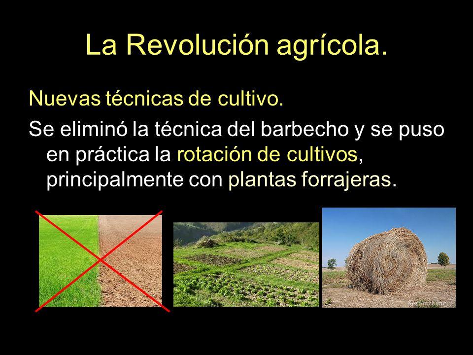 La Revolución agrícola. Nuevas técnicas de cultivo. Se eliminó la técnica del barbecho y se puso en práctica la rotación de cultivos, principalmente c
