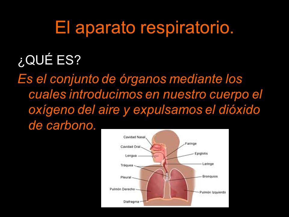 El aparato respiratorio. ¿QUÉ ES? Es el conjunto de órganos mediante los cuales introducimos en nuestro cuerpo el oxígeno del aire y expulsamos el dió