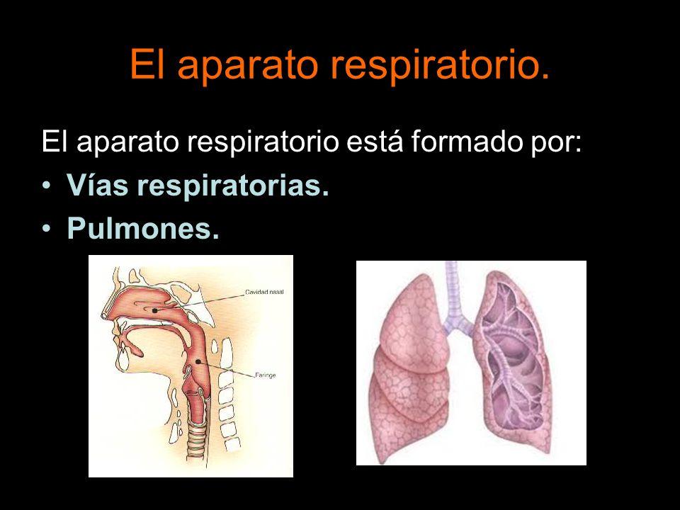 El aparato respiratorio está formado por: Vías respiratorias. Pulmones.