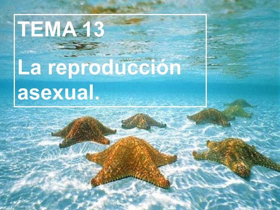 La mayoría de los animales y los seres humanos se reproducen sexualmente, es decir, se necesitan dos individuos de diferente sexo.