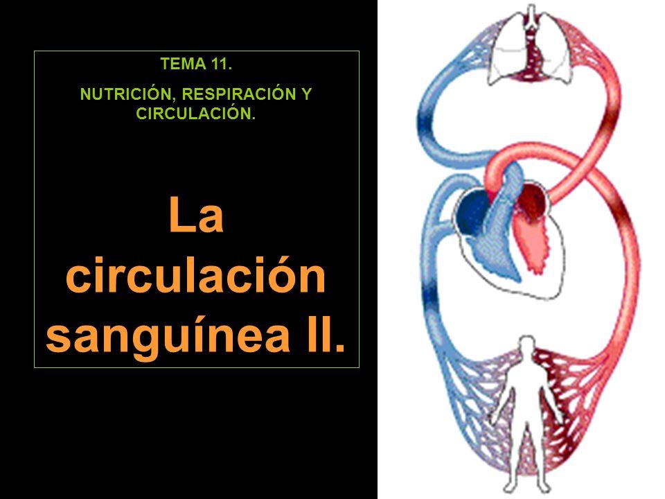 El recorrido de la sangre.Circulación pulmonar.