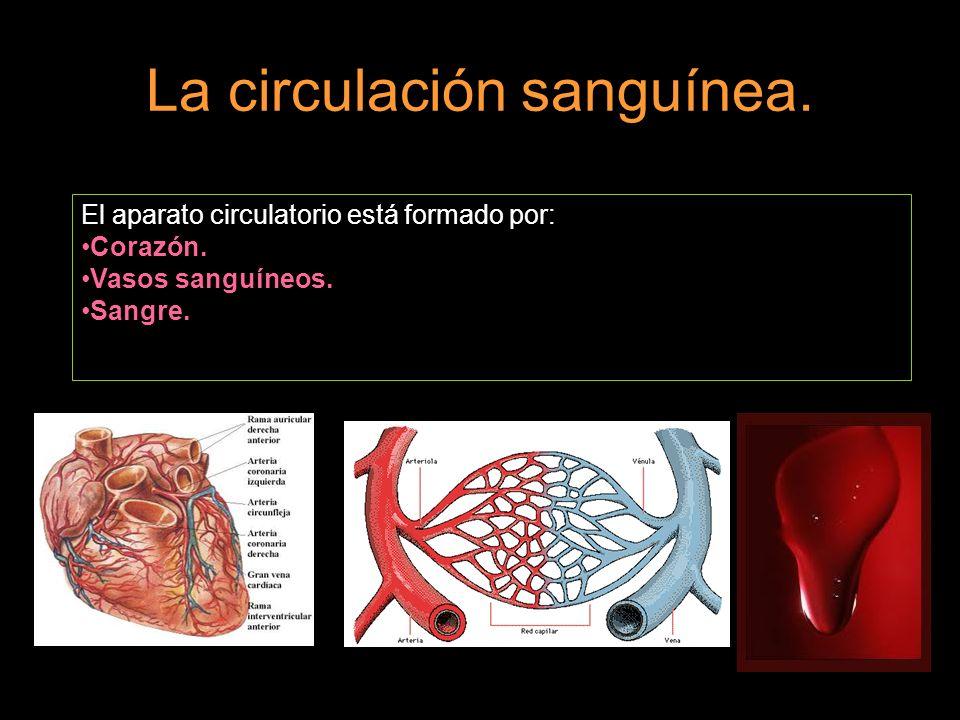 La sangre.La sangre está formada por el plasma sanguíneo y tres tipos de células: Glóbulos rojos.