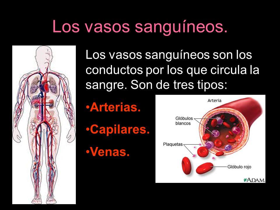 El corazón. El corazón es el encargado de impulsar la sangre hacia todo el cuerpo.
